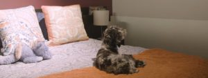 Dog-Friendly Texas Hotels