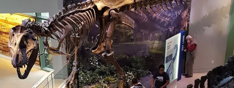 Texas Wild exhibit dinosaurs